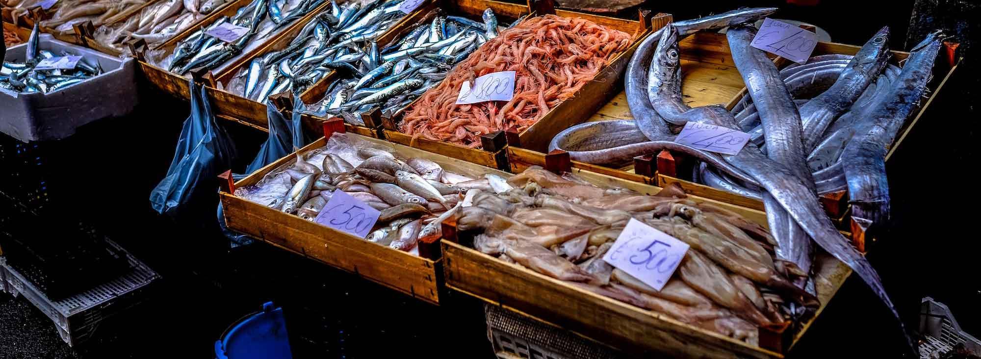 Dives agencija - pomocni radnik za preradu i sortiranje ribe